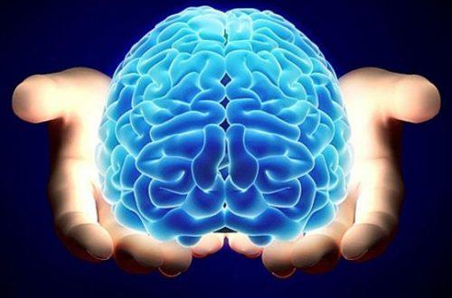 cerebro comprador
